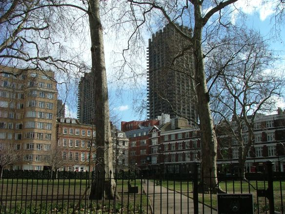London Plane Tree (4)