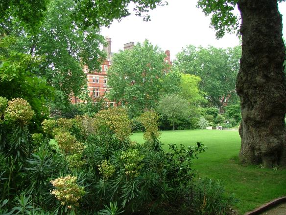 London Plane Tree (5)