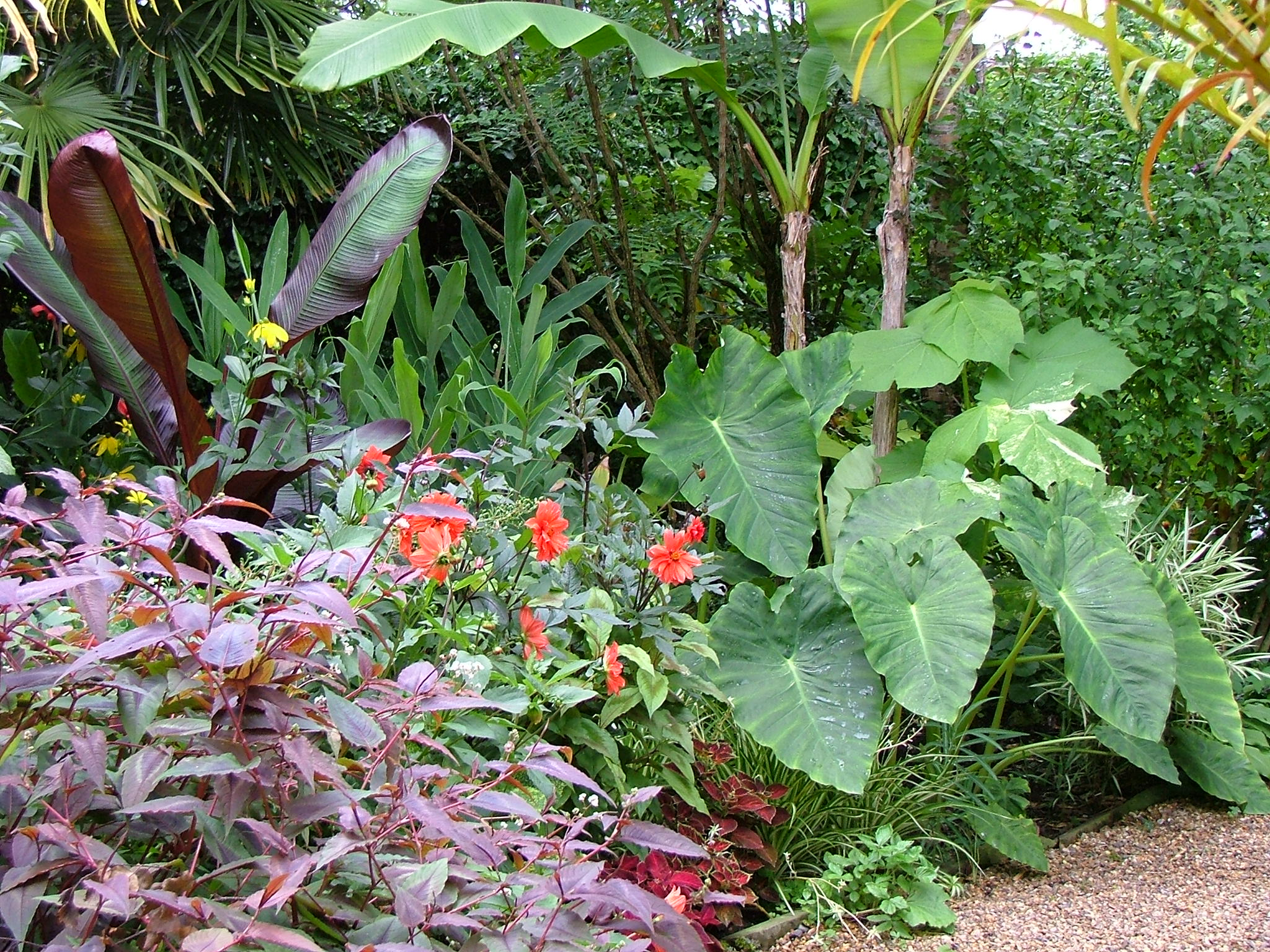 Will giles away from the drawing board for Hardy plants for the garden